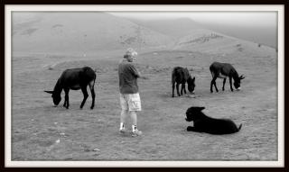 olibrius - contrepoints - l'âne